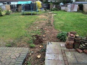 stump-ground-before